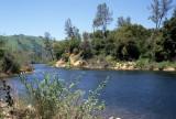 AMERICAN RIVER - PINUS SABINIANA - DIGGER PINE COMMUNITY.jpg