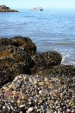 CALIFORNIA - CHANNEL ISLANDS NP - ANACAPA ISLAND - Rocky Intertidal Zone Anacapa Island.jpg