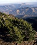 CALIFORNIA - MOUNT DIABLO - PLANT SPECIES E (4).jpg