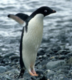 Birds & Mammals of Antarctica