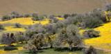 CARRIZO PLAIN NATIONAL MONUMENT - VIEWS OF THE FLOWER FIELDS - ROADTRIP SPRING 2010 (2).JPG
