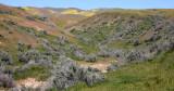 CARRIZO PLAIN NATIONAL MONUMENT CALIFORNIA - WALLACE CREEK SAN ANDREAS FAULT OVERLOOK (4).JPG