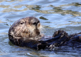 Elkhorn Slough Wildlife Reserve