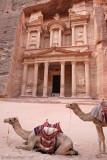 Camel taxis at Treasury.jpg