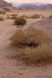 Desert gords.jpg