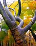 fuzzytree