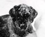 Hawk in snow 5mos