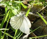 Butterflies of Nova Scotia