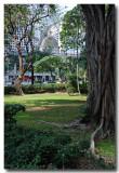 chater garden 3.jpg
