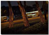 trees - causeway road.jpg