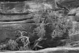 juniper sandstone cliff_C7A0150 bw.jpg