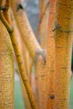 Bark Detail