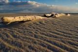 Drift log chatham south beach
