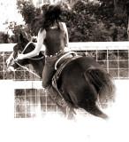 Women & Horses  --- GRACEFUL - STRONG - DEPENDABLE - FUN!