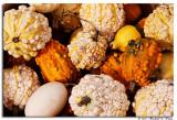 Gourds copy.jpg