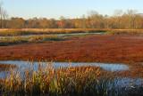 Autumn Wetlands_3773.jpg