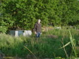 the_allotment_project