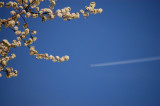 Spring Flying By