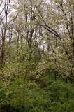 Spring Goin' Green