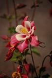 Flower at Reedman Farms