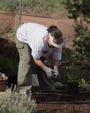 Herb Garden Planting (2449)