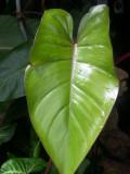Floral 3