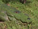 Cover Gator