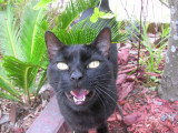 Mischief The Cat