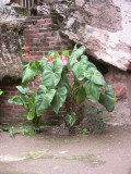 Floral Guatemala 1