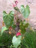 Floral Guatemala 2