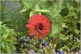 Floral Guatemala 3