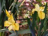 Zilker Botanical Gardens, Zilker Park, Austin, Texas