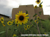 with sunflowers 32
