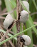 2599 Snails.jpg