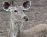 Ranthambore NP and area