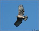 6361 Mountain Hawk-Eagle.jpg