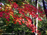 Slices of Autumn.