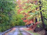 Rainy Autumn Day.