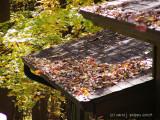Autumn Winds.jpg