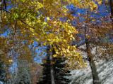 Autumn Winds.