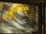 Reflecting Autumn Winds.