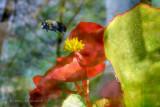 Buzy Bumble Bee.