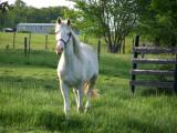 Kentucky Horse Farm.