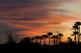 03162010   Tropical Sunrise  2140