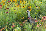 053110   Chick in Flowers  8224