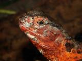 Lizard...Philly Zoo