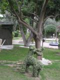 Botanical Garden  - Green Animal