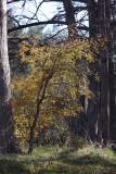 Leaning towards Autumn