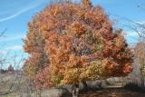 Autumn Changes