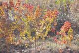 Sun on autumn leaves